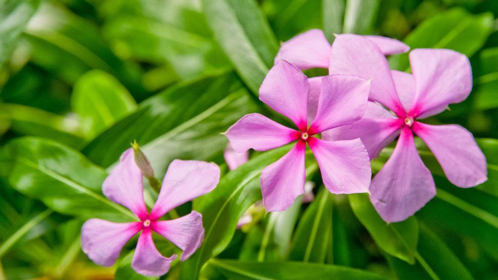 zapach roślin